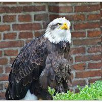 Roofvogelshow in het Markiezenhof